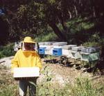 La abeja y el hombre